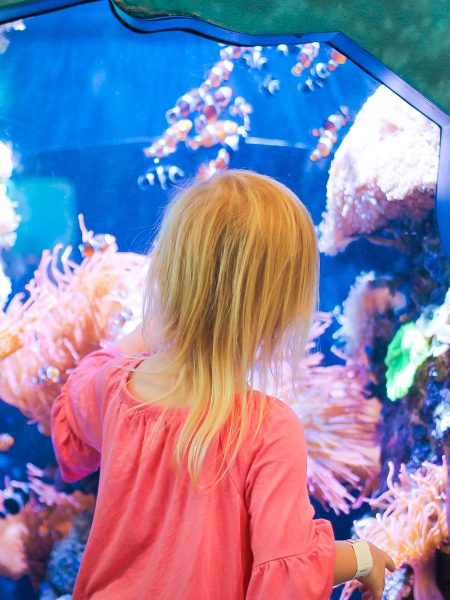 Family Vacations: A Monterey Travel Guide