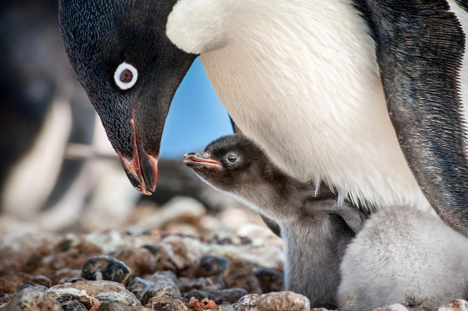 Are you obsessed with Disneynature films? I'm sharing which ages will love Disneynature Penguins and what parents should be aware of!