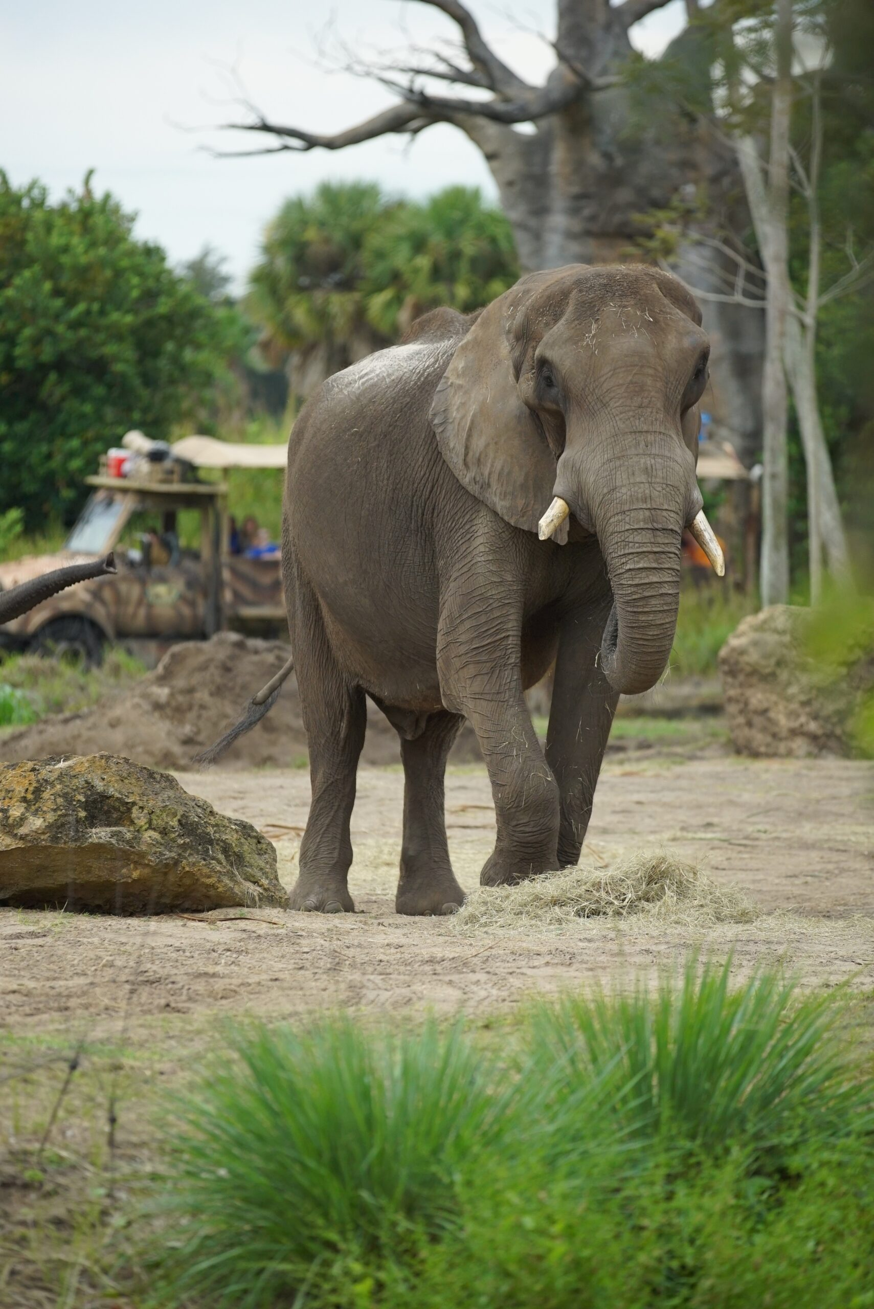 Have you been watching the trailers for the latest Disney Plus docuseries? This review will tell you if the new Magic of Disney's Animal Kingdom is a must watch for kids!